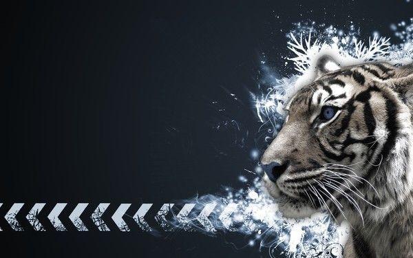 fond d'écran tigres - Page 2 38e61179