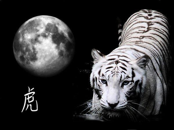 fond d'écran tigres - Page 3 7c91c70a