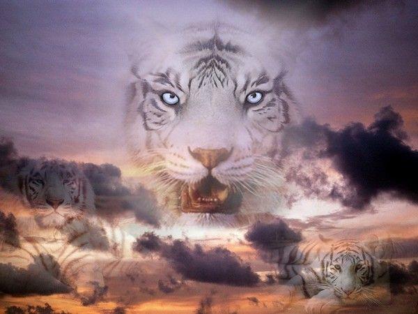 fond d'écran tigres - Page 2 8d73e14d