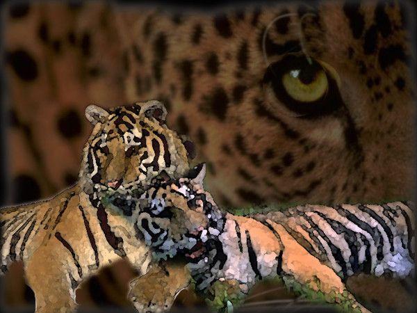 fond d'écran tigres - Page 3 Afa06965