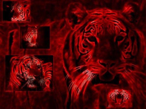 fond d'écran tigres C09e29d1