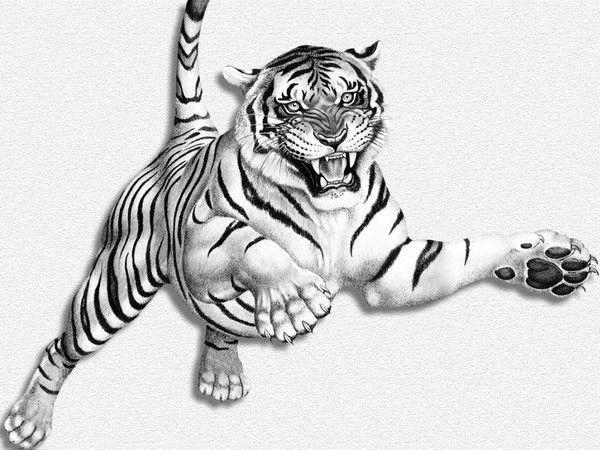 fond d'écran tigres - Page 4 D059e03a