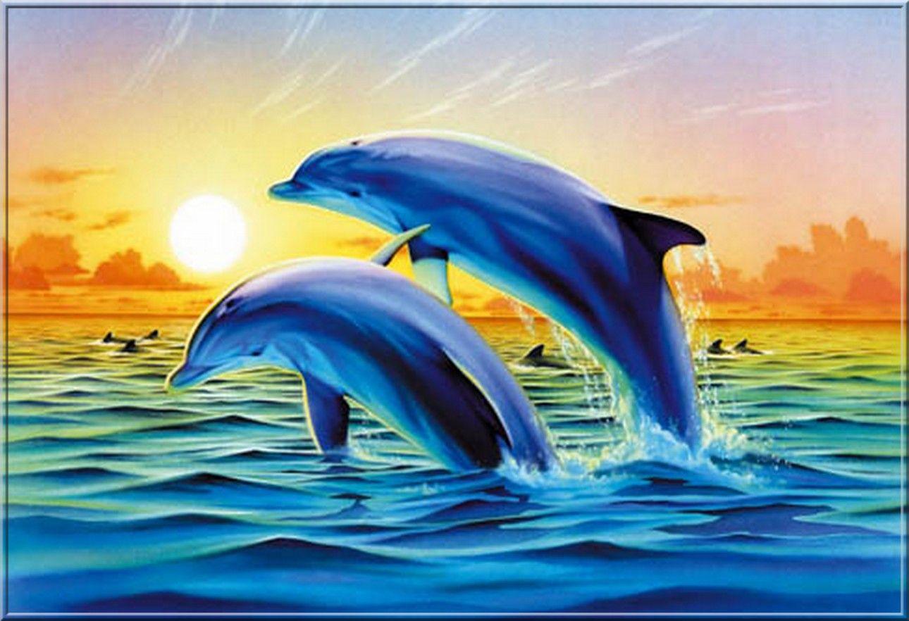 fond d ecran dauphins